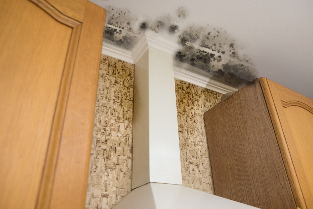 Mold on the ceiling of a home.