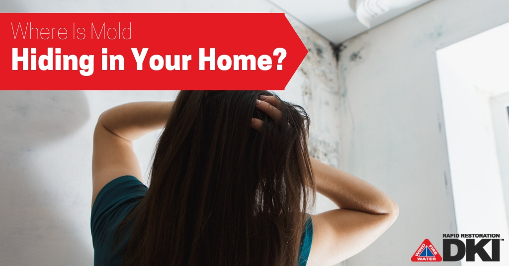 Where Is Mold Hiding in Your Home?
