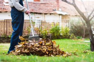 A person raking a pile of leaves.