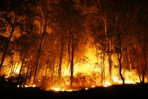 A brush fire at night.