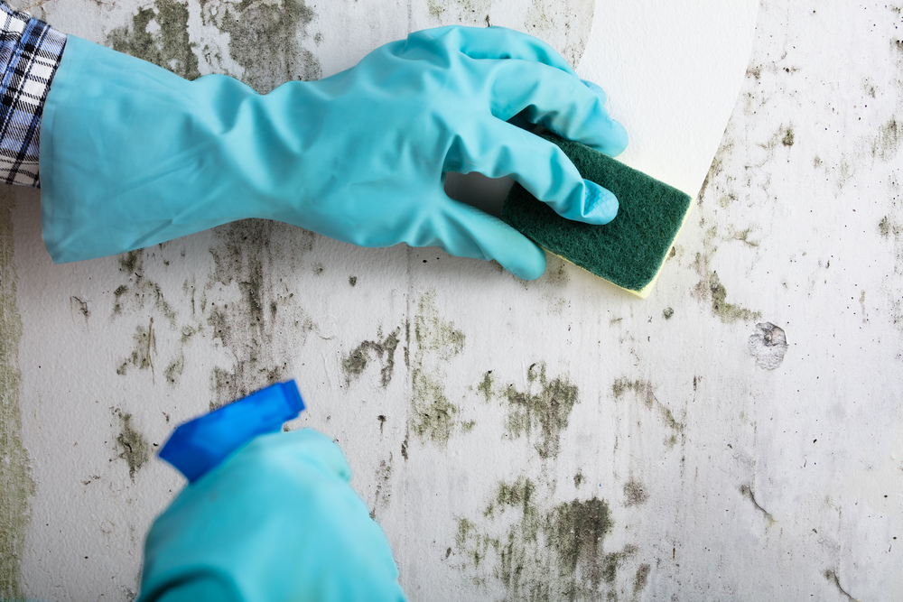 Someone wearing gloves and wiping off mold from a wall.