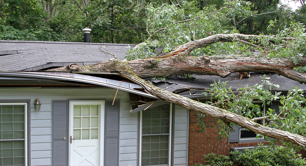 Tree that's fallen on a home.