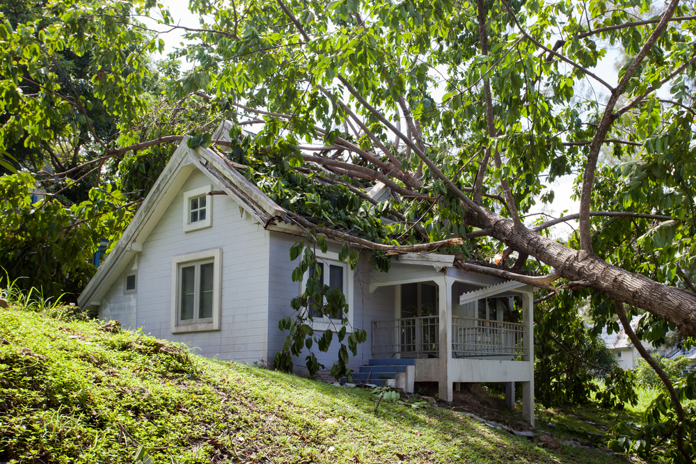 A tree that's fallen on a home.