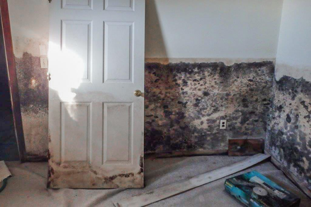 The inside of a room that's covered in mold.