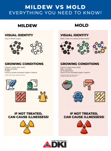 mildew vs mold
