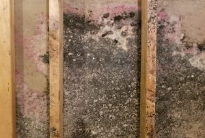 mold in remodel