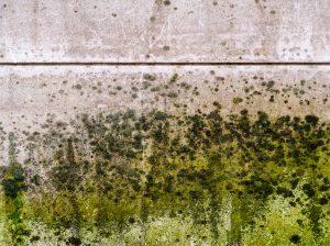 green mold on floor