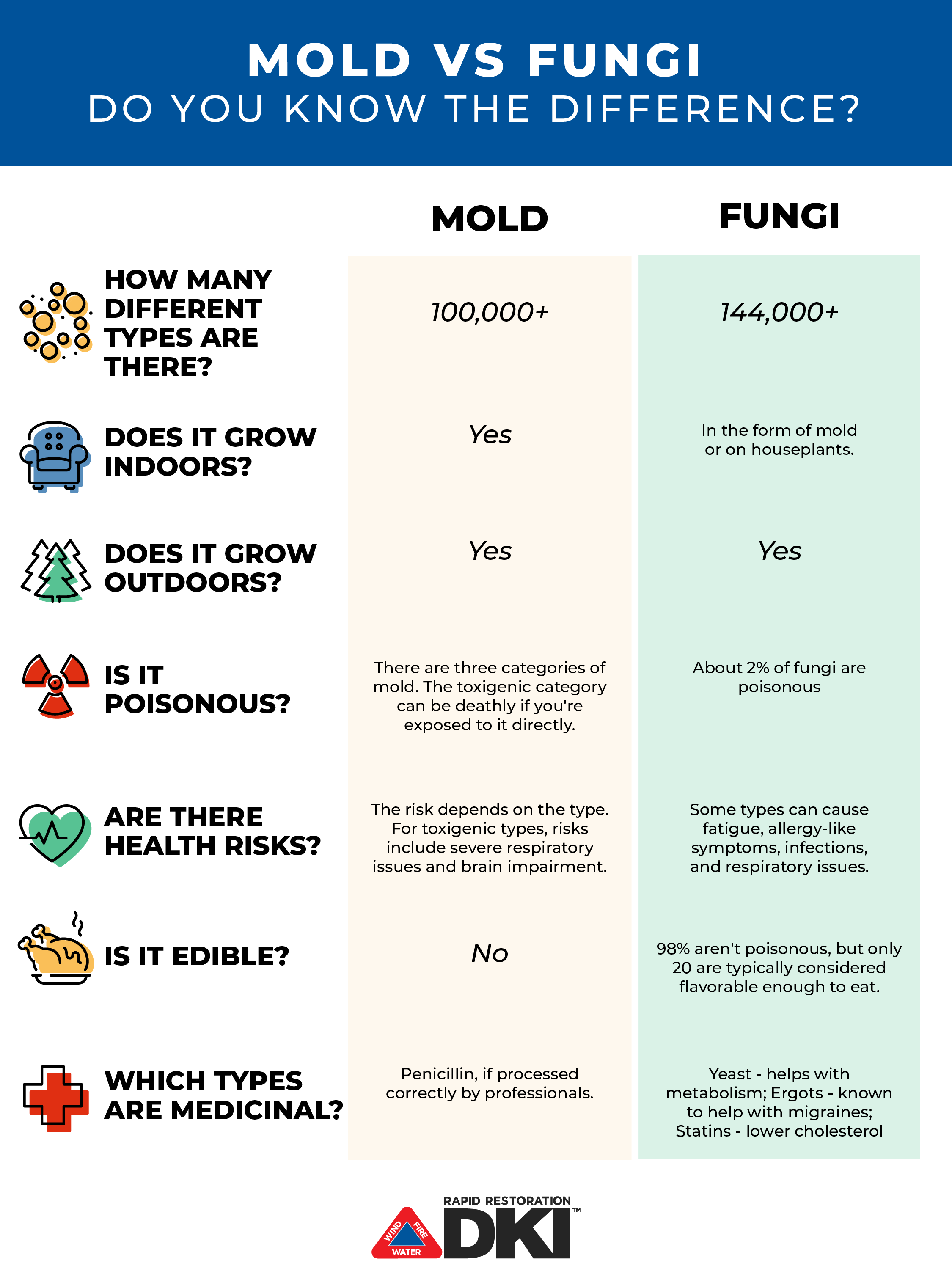 mold vs fungus