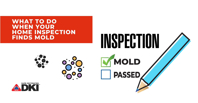mold inspection header